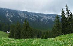 Erdely,Kiralyko