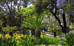 Szent Katalin Park Funchalban, Madeira