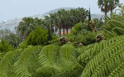 Páfrányok és pálmák Madeirán