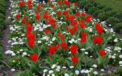 kertek és parkok tulipán százszorszép