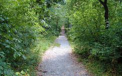 Erdei sétány, Pécs melett