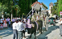 RONDA-SPAIN, procesión el Rocío