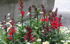 Svájci virágok