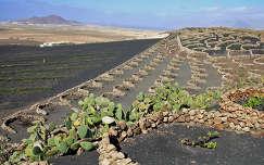 La Gería borvidék, Lanzarote