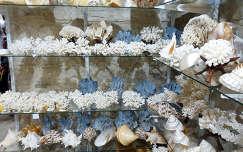 Kagylók, Korallok, csigák