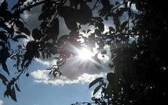 Cseresznyefa árnyékában