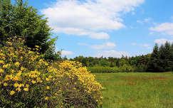Magyarország, Kám, Jeli arborétum, rododendron