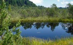 Erdély-Szent Anna tó- Mohos tőzegláp
