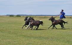 hortobágy magyarország lovak