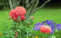 Virágok Madeirán