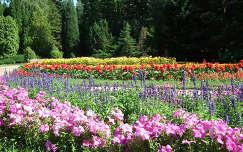 Virágosrét a Vácrátóti arborétumban