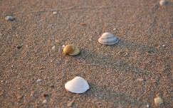 napfelkelte a tengerparton        (Lido di Jesolo)