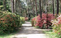 Magyarország, Jeli Arborétum