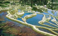 Rizsföldek, Kína