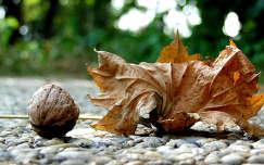 Itt az ősz(Orbán Márk)Szomód