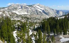 USA,California,Yosemite N.P.