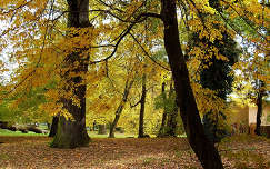 őszi liget