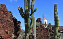 Jardin de Cactus, Lanzarote, Kanári-szigetek