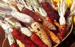 Kukoricacsövek ősszel - fotó: Kőszály