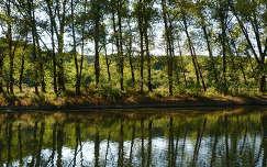Ipoly, folyó, erdő