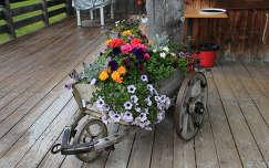 nyári virág nyár petúnia virágcsokor és dekoráció