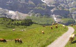 Jungfrau a Milka tehenekkel, Svájc
