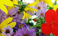 muskátli virágcsokor és dekoráció őszirózsa