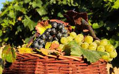 ősz gyümölcs gyümölcskosár szőlő