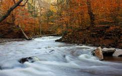 Folyó az őszi erdőben