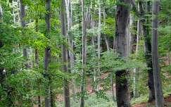 Pécs, Mecsek erdő, fa