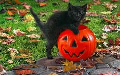 állatkölyök ősz macska levél halloween