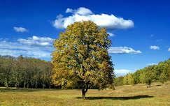 Magányos fa Parádfürdő közelében