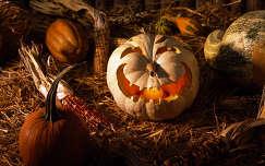 halloween tök termény