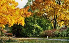 Botanikus kert,Budakalász