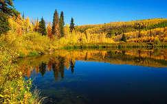 ősz erdő tükröződés tó