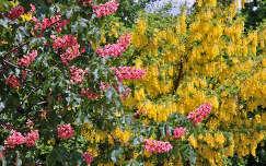 Gesztenyefavirág