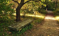 Pad, Vácrátót, Arborétum, Magyarország