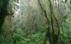 Monteverde Reserva, Santa Elena