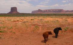 USA,Arizona/Utah,Monument Valley
