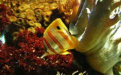 Amsterdam Artis Aquarium