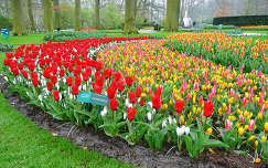 Keukenhof Holland, Showwinner
