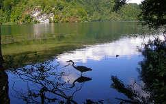 Horvátország, Plitvicei tavak, szürke gém