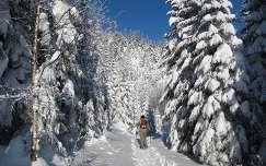 út fa fenyő örökzöld tél téli sport