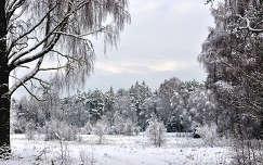 Tél Svédországban
