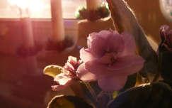 fokföldi ibolya fény trópusi virág