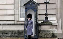 Buckingham-palota őre(Orbán Márk)
