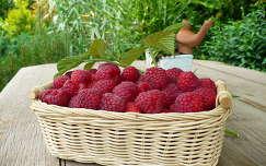 málna gyümölcs gyümölcskosár
