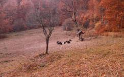 Vaddisznó les,Szováta