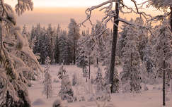 Skandináv téli erdő