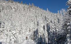 út fenyő erdő tél téli sport